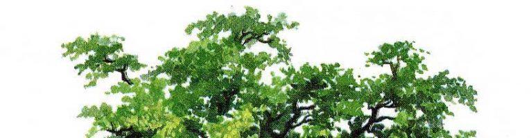 Sognare un albero o un bosco: simbologia significato e numeri connessi