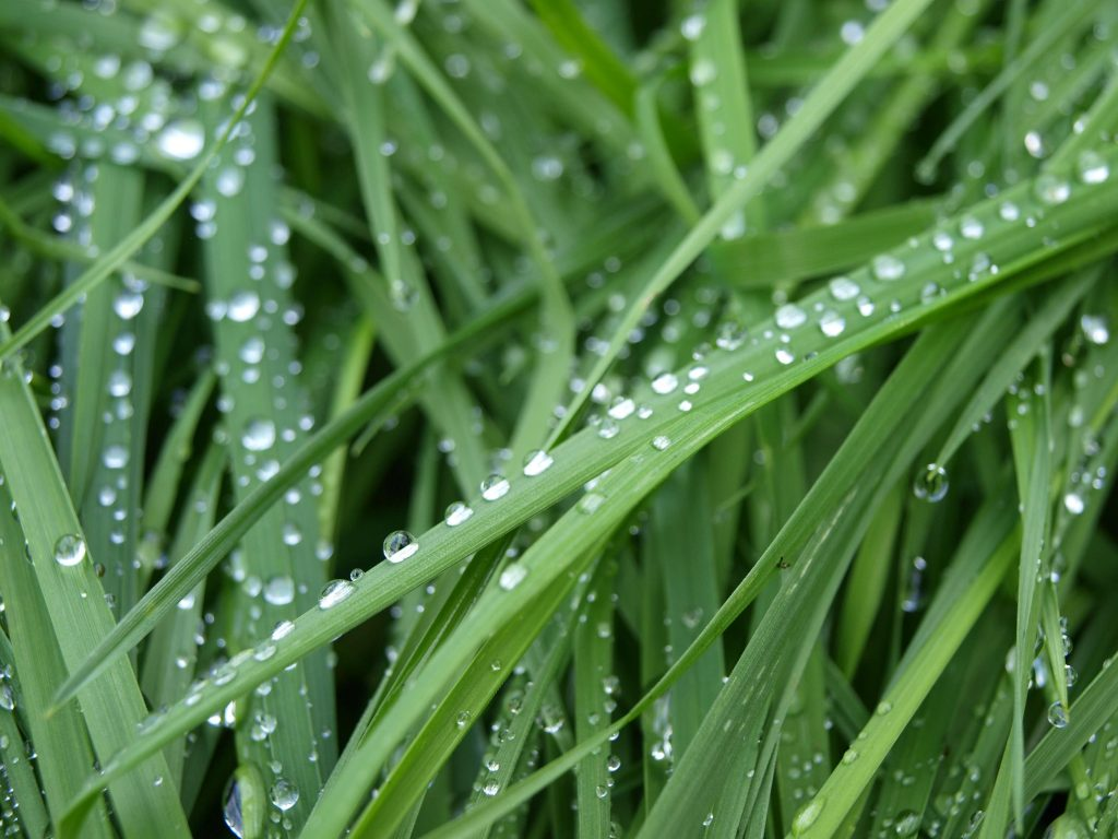 Prato: i semi più utilizzati