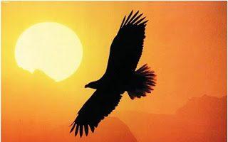 """Sognare """"un Aquila"""", """"Alto e Basso"""", Volare: numerologia e significato"""