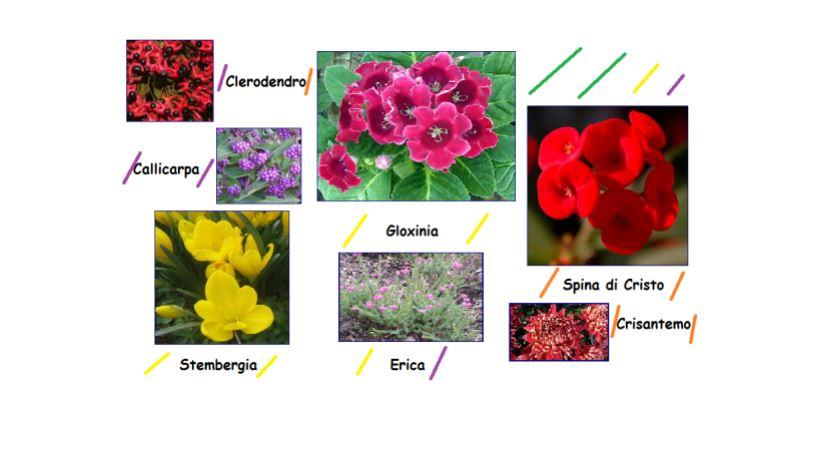 I fiori e le piante di Novembre: giardino-regali-cerimonie-bouquet