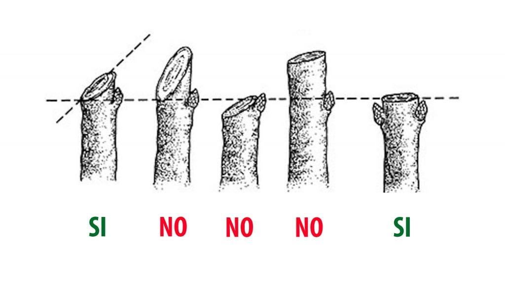 Taglio potature