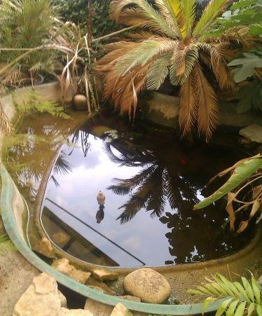 Vasca lago da giardino