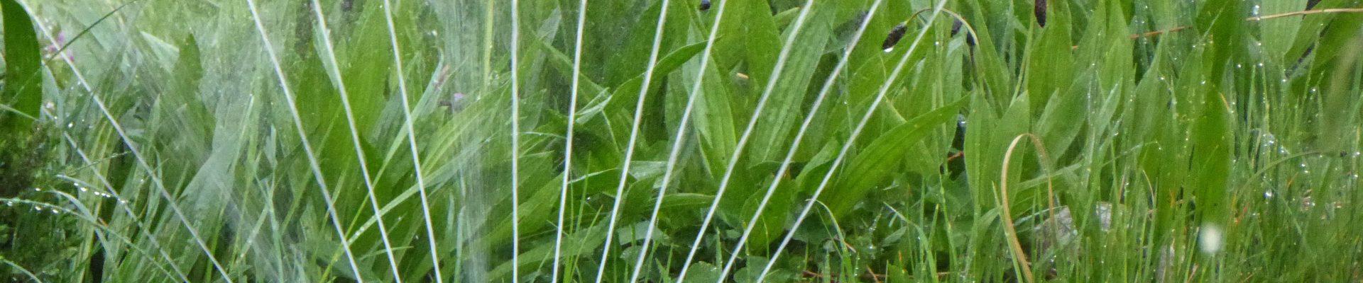Sistemi d'irrigazione in giardino e in casa: come annaffiare