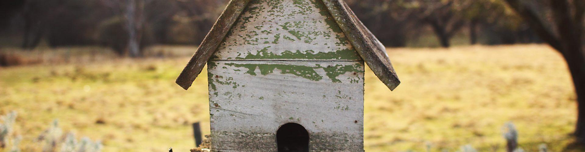 Come attirare gli uccelli nel proprio giardino: casetta di ...
