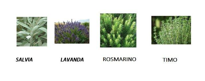 Come coltivare e riprodurre le aromatiche