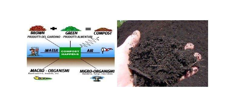 Microorganismi e compost