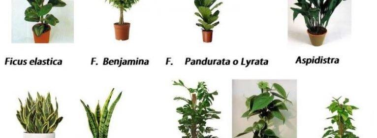 Quali piante scegliere per ambienti poco luminosi