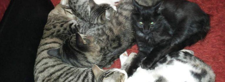 Gatti e unghie: come ridurre danni e distruzione
