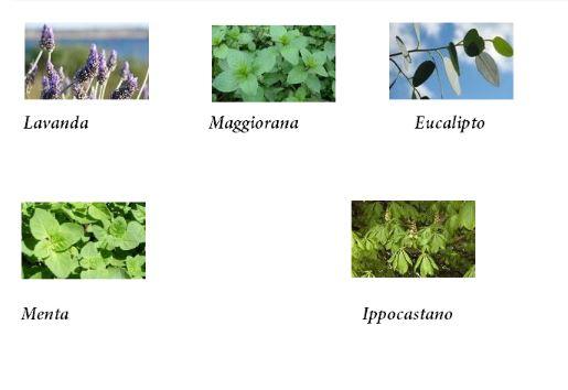 Aromatiche orto aprile