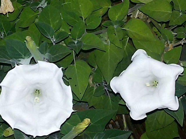 Aprile 10 cure per le piante in casa