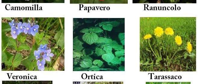 Le 9 erbe infestanti comuni riconoscerle ed eliminarle