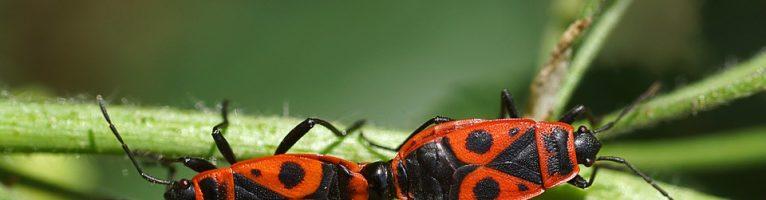 Sognare gli insetti: significato, numerologia, simboli numeri da giocare