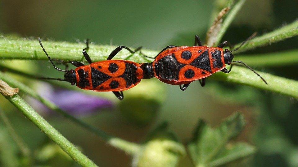 Sognare gli insetti: significato, numerologia, simboli numeri da ...