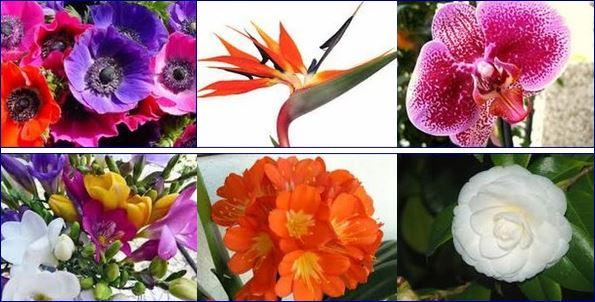 Marzo: 10 consigli per le piante in casa, giardino e balcone