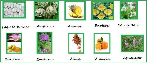 Frutti e piante fitoterapiche dimagrire e star bene: le 10 erbe miracolose