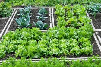 Orto in pochi metri 10 consigli come e cosa piantare for Cosa piantare nell orto adesso