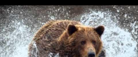 Sognare un orso significato simboli e numeri da giocare