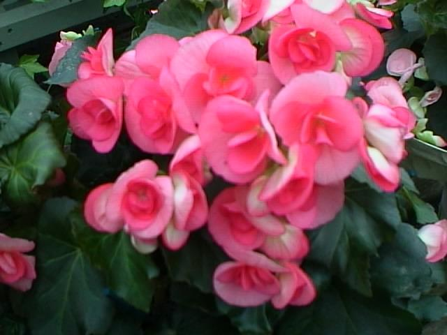 Ottobre 10 consigli per le piante ed i fiori in casa, balcone e terrazzo