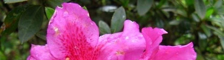 10 piante da fiore primaverili da tenere in casa