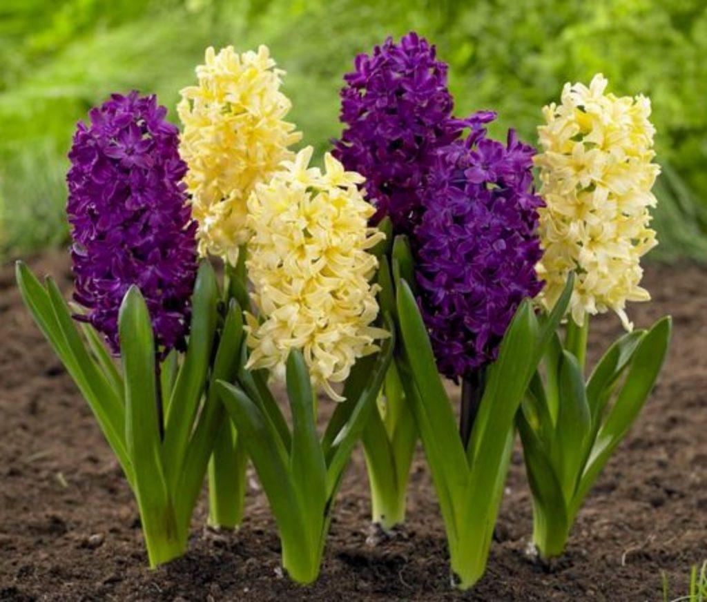 10 piante da fiore primaverili da tenere in casa notizie in vetrina - Piante da tenere in casa ...