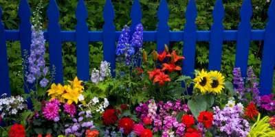 Come creare un giardino fiorito notizie in vetrina for Creare un giardino semplice