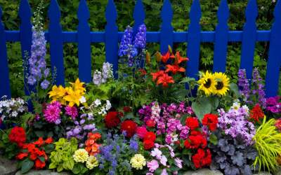 Come creare un giardino fiorito notizie in vetrina for Giardino fiorito