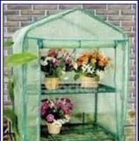 Come scegliere le piante per il giardino e la casa