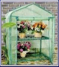 piante serra