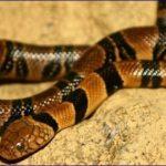 I 10 serpenti più velenosi e letali al mondo con video