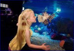 acquario sea life roma 3