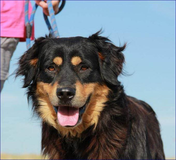 Perchè prendere un cane in canile: Teti dolcissimo!