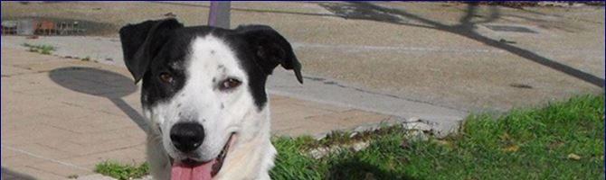 Prendere un cane in canile: 5 motivi validi