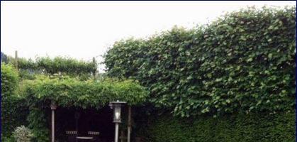 Prato ed erba da giardino: come scegliere