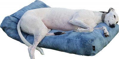 Cucce e cuscini cani e gatti personalizzabili Beds4Pets