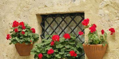 I fiori in primavera: colori in giardino