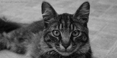 Come fotografare gli animali nel migliore modo