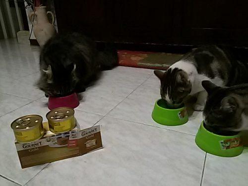 Cibo preferito dai miei gatti Gourmet Gold e i Tortini