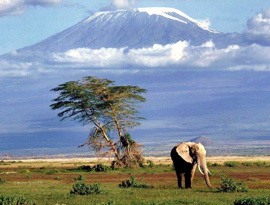 Organizzare un tour in Africa: safari, mare e tanto altro
