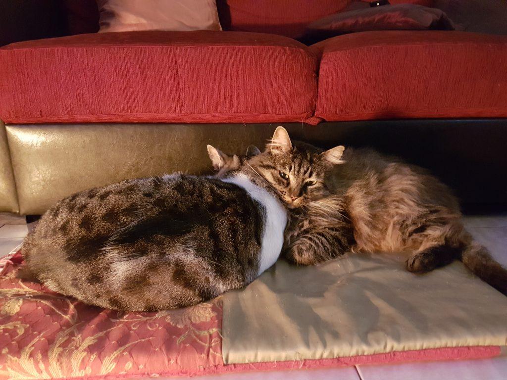 Cuccia Gatto Fai Da Te il benessere per i nostri animali le cucce per cani e gatti