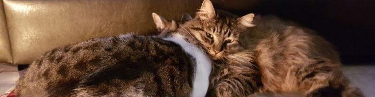 Il benessere per i nostri animali le cucce per cani e gatti