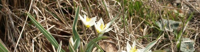 Sognare dei fiori: significato, simbologia e numerologia