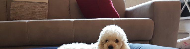 Cucce morbide e confortevoli per cani e gatti