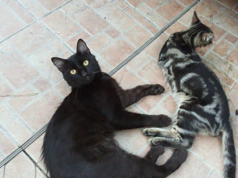 Gatto morso da altro gatto: cosa fare