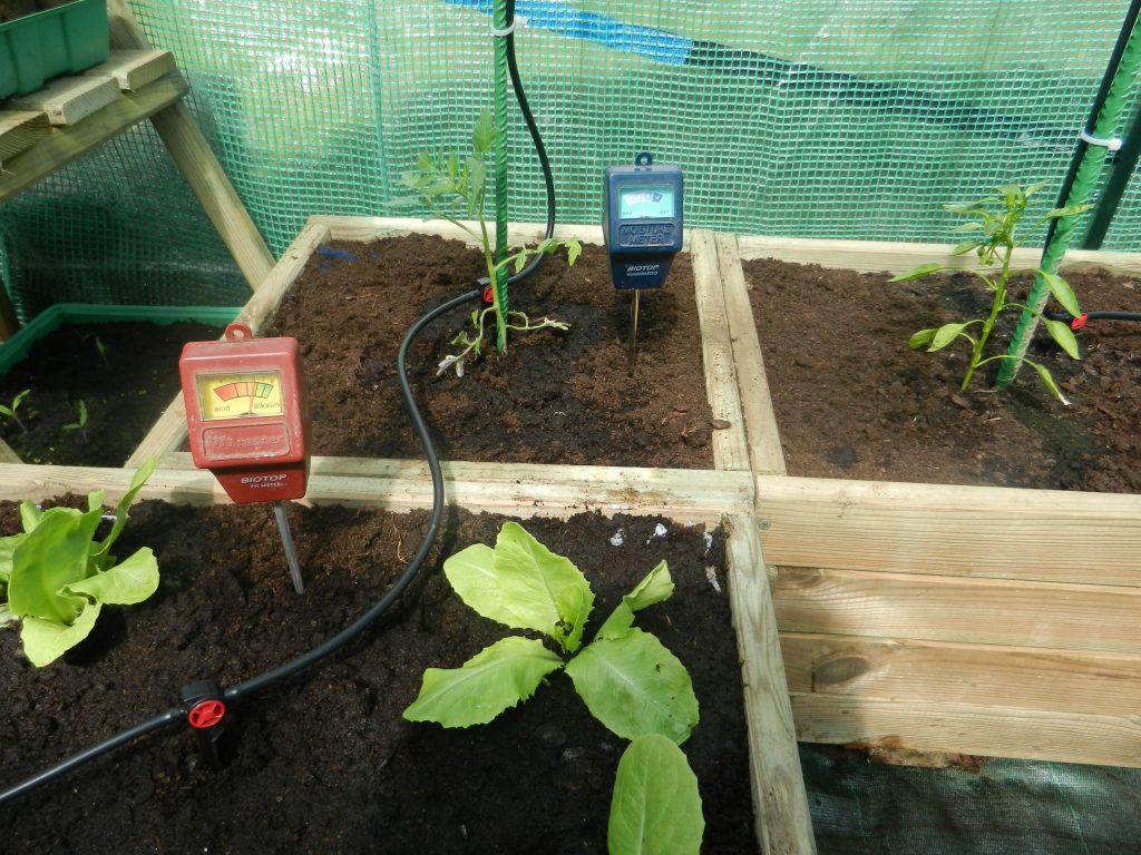 Verde verticale: orto in casa