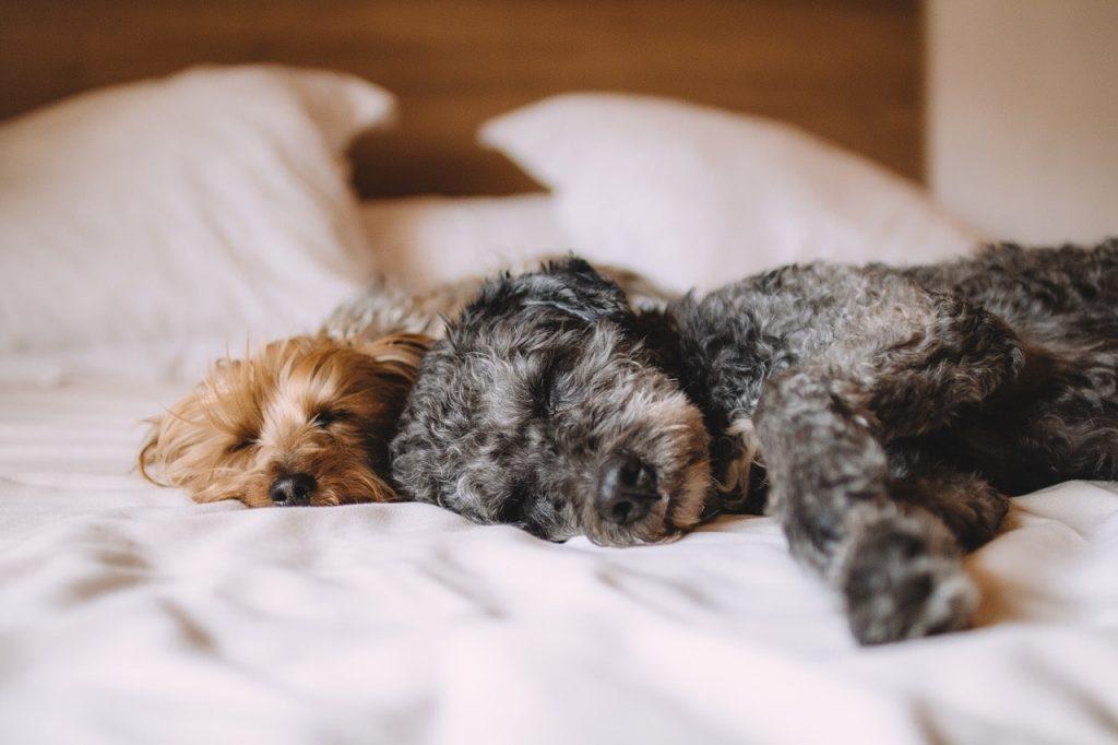 Vivere con gli animali: 5 consigli utili