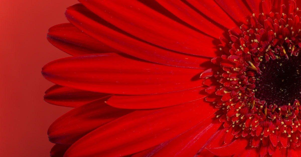 Sognare Fiori Gialli.Sognare Il Color Rosso O Qualcosa Di Rosso Significato Simboli