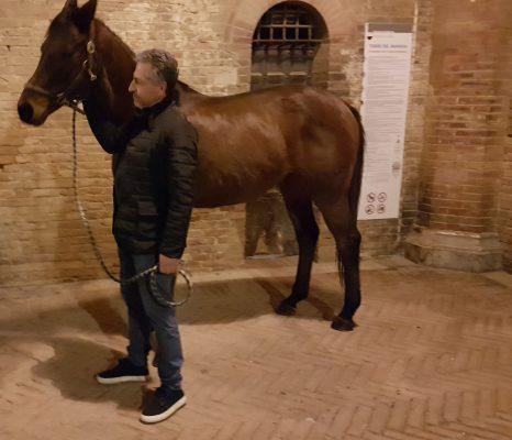 Palio di Siena: Rocco Nice campione contrada Drago: intervista a Massimo Marchetti