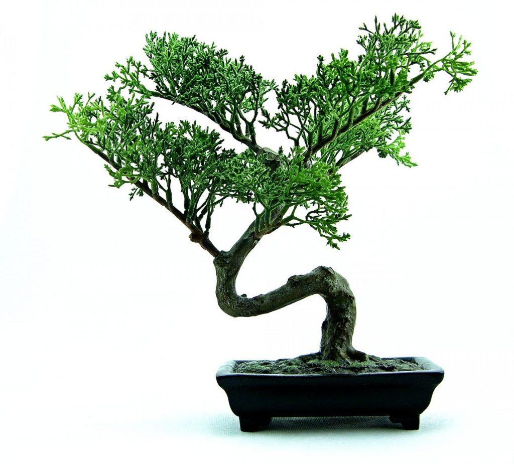 Bonsai al chiuso e bonsai all'aperto quali sono le differenze