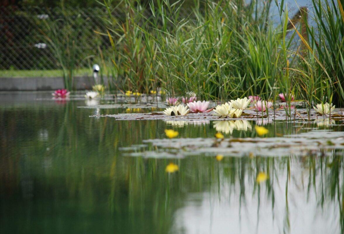 Il laghetto d'acqua dolce: originale idea per abbellire gli ambienti outdoor