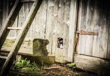 Come restaurare una vecchia scala a pioli di legno
